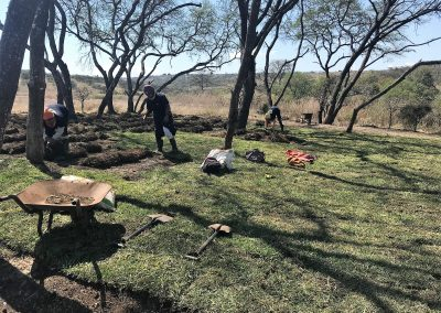 Buffalo lawn installation almost complete at Tala Private Game Reserve