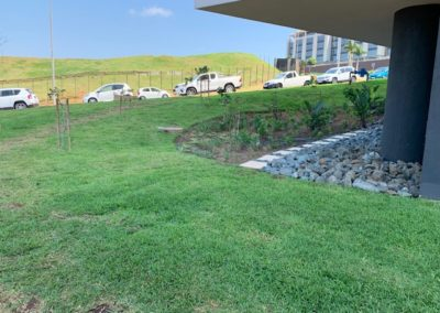 Buffalo lawn installed in a business park in Umhlanga