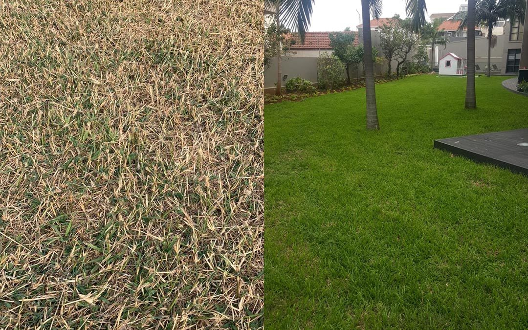 REVITALIZE YOUR DORMANT LAWN