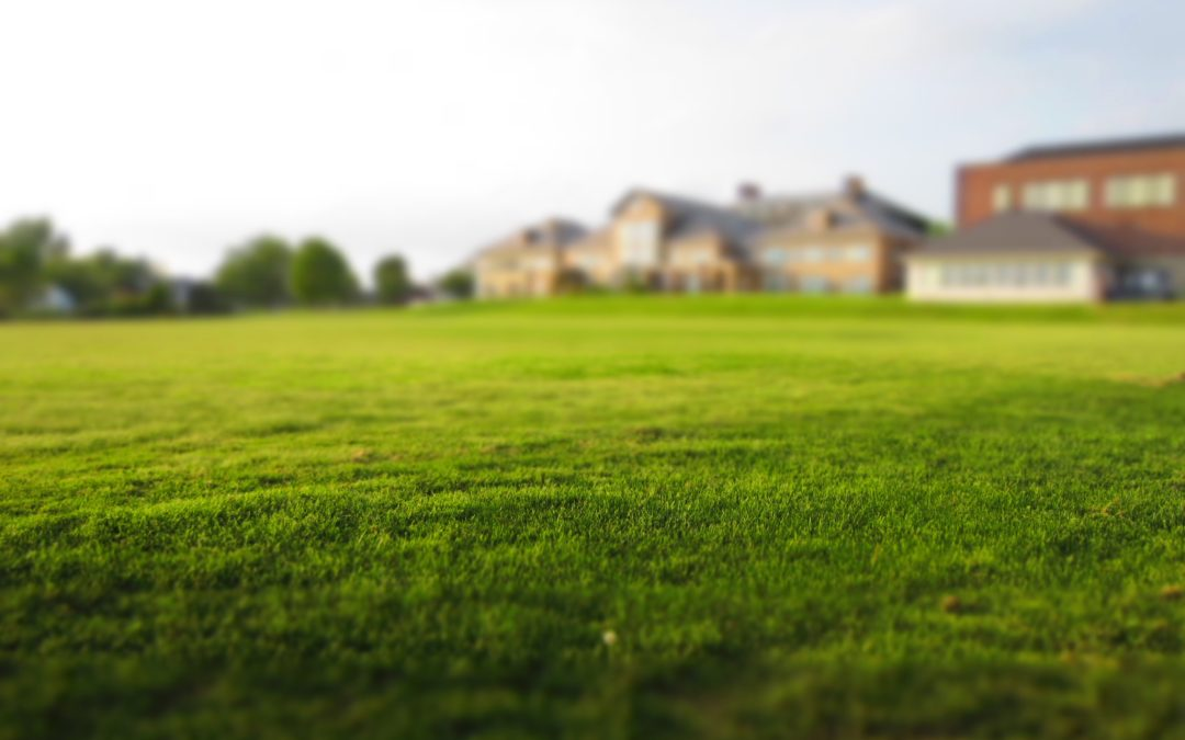 GRASS GROWING DO'S AND DON'TS