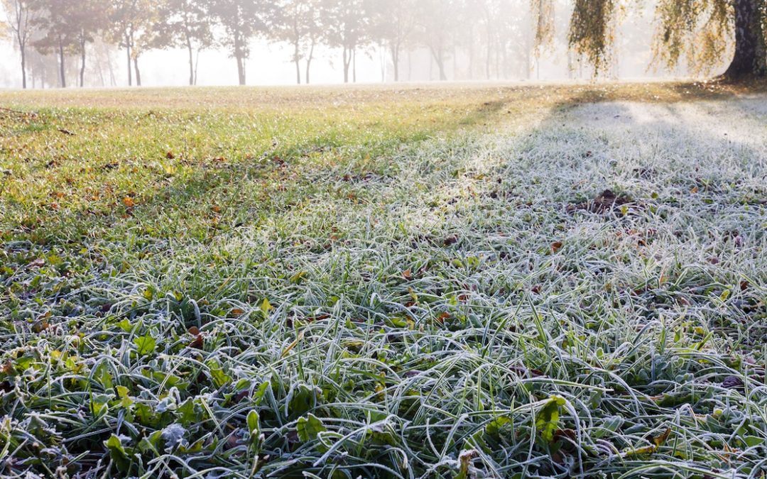 GET YOUR LAWN WINTER READY