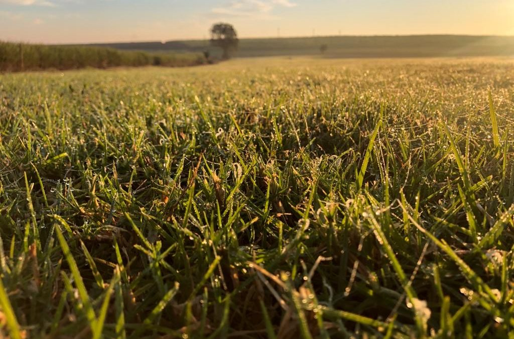 WHAT TO DO AFTER THE SNOW HAS MELTED – SPRING LAWN CARE