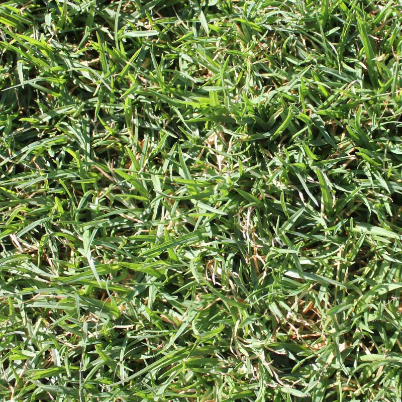 Evangrass Quality Instant Lawn
