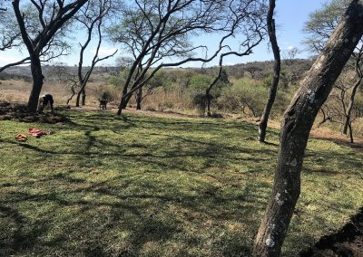 Buffalo Lawn installation complete at Tala Private Game Reserve