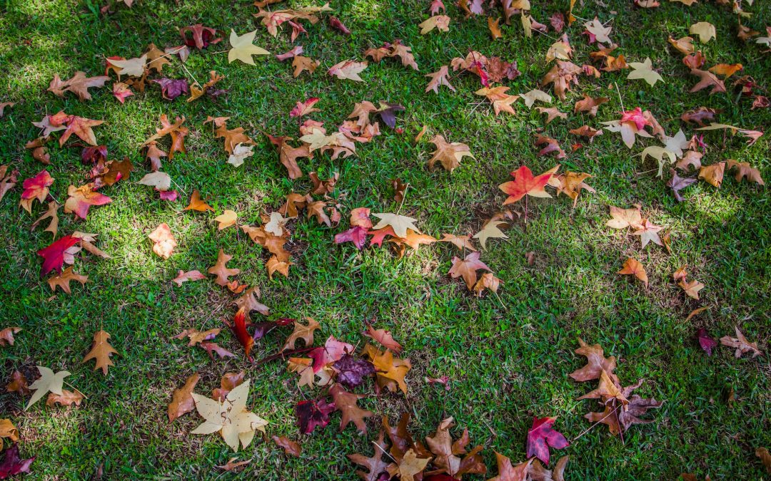 WINTER IS COMING: SHOW YOUR LAWN SOME LOVE